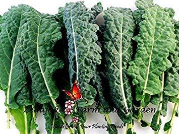 geoponics kale lacinato semi 400 a 5lb bulk nero insalata microgreen facile # 291