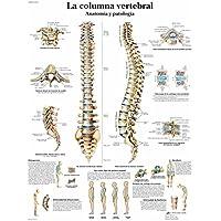 3B Scientific Impreso En Papel, la Columna Vertebral, Anatomía y Patología