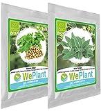 BIO Coriandre & Sauge - Graines de plantes aromatiques/Intérieur & Extérieur
