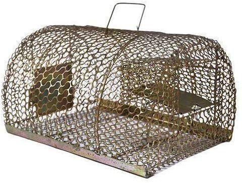 ReliquaMate Iron Trap/Cage for Catching Rat/Mouse/Rodent/Chipmunk/Squirrels, Humane(No Kill), Big Size & Durable