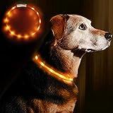 LED Leuchthalsband Hunde Halsband - Anicoll USB wiederaufladbar - Längenverstellbarer Haustier Sicherheit Kragen für Hunde und Katzen- 3 Modus 12 Lichte (Orange)