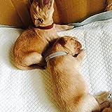 Hemore Hundehalsband, verstellbar, Klettverschluss, 12 Farben