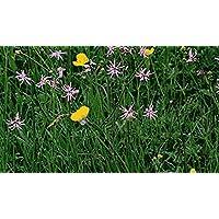 Portal Cool 25G: Flores Silvestres y pastos de Pradera para Las áreas Hãºmedas y un Estanque Rodea