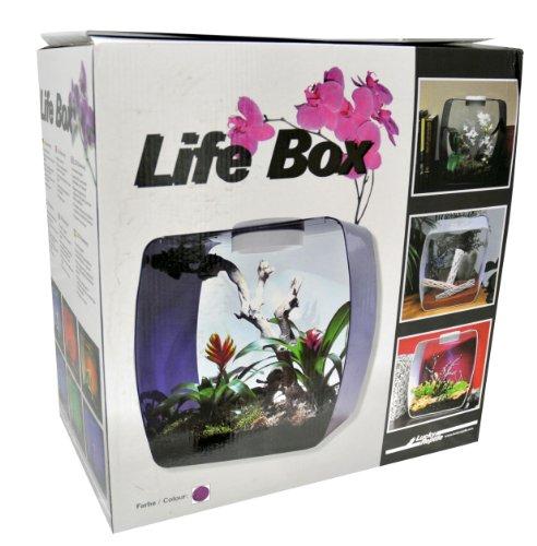 Lucky Reptile LB-35P Life Box 35 Nanoterrarium aus Acrylglas, beere