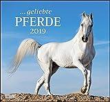... geliebte Pferde 2019 – DUMONT-Wandkalender – Format 38,0 x 35,5 cm