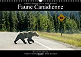 Faune canadienne : A la rencontre de la faune ouest-canadienne. Calendrier mural A3 horizontal