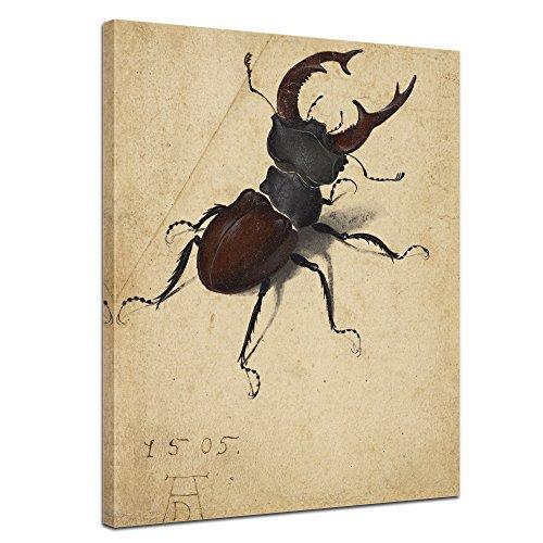 Bilderdepot24 Kunstdruck - Alte Meister - Albrecht Dürer - Aquarell - Hirschkäfer - 50x60cm...
