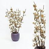 Inter Flowers - 5 piezas Blossom algodón con tallo 5-7 flor - aprox. 60 cm - Decoración de comercio de hadas, regalo perfecto, decoración natural seca, tallos de manualidades, flores secas para fiesta, día de la semilla de abedul, casa u oficina