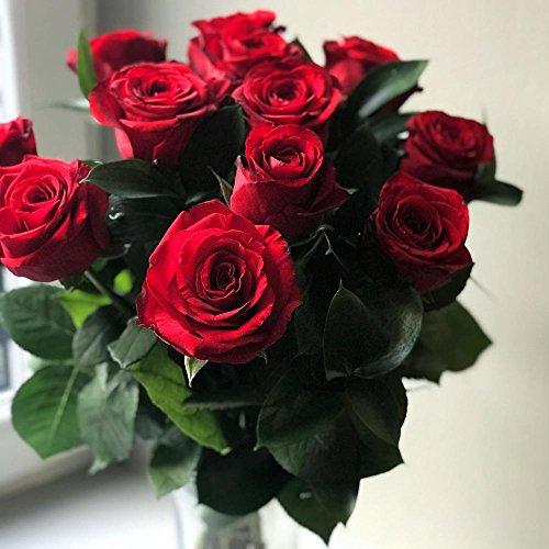 Clare Florist 12 Red Roses True Romance Fresh Flower Bouquet - Premium Fresh Roses Hand Arranged by Expert Florists