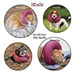 iCollr – The Inflatable Pet Collar for Cats and Dogs in Post Surgery Recovery - MEDIUM + 8