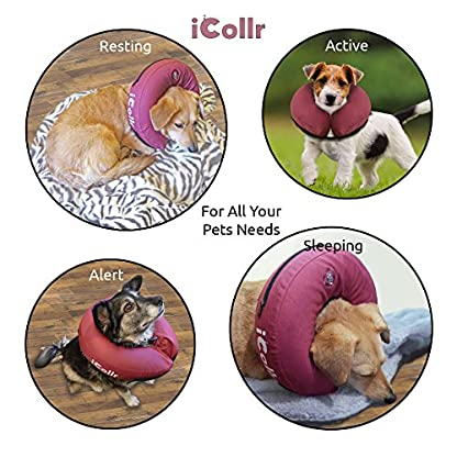 iCollr – The Inflatable Pet Collar for Cats and Dogs in Post Surgery Recovery - MEDIUM + 3