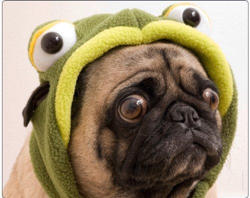 """Hochwertige Hund Mauspad/Mauspad mit Bild von Mops:\""""MOPS mit Frosch,\"""""""
