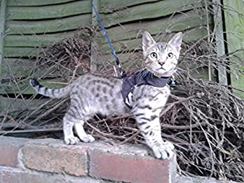 Mynwood Cat Jacket Arctic Combat Harnais à l'épreuve des évasions pour chatons jusqu'à 8 mois