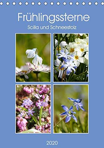 Frühlingssterne Scilla und Schneestolz (Tischkalender 2020 DIN A5 hoch)