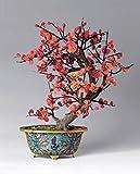35 Samen / Packung Begonia Samen Malus spectabilis Chinesisch Begonia semperflorens crabapple Bonsai Tree Seeds
