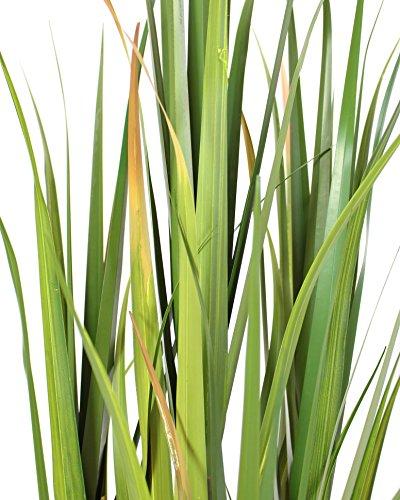 Frank Flechtwaren Deko-Topfpflanze Bambus