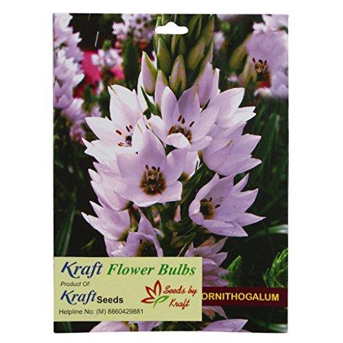 Kraft Seeds Ornithogalum / Chincherinchee Flower Bulbs White by Kraft Seeds