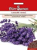 Lavendel Verani   Dürr-Samen