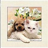 Gatito y cachorro, 40* 40cm 5d imagen 5d24