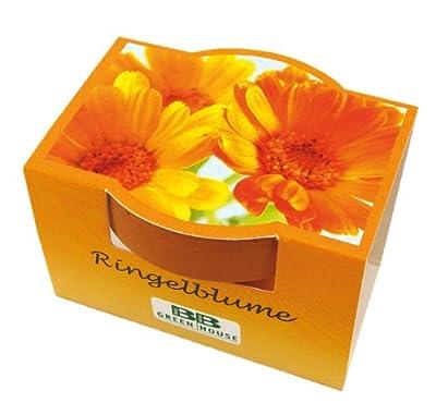 10er Set Minipflanzset Ringelblume von Bull + Bear bei Du und dein Garten