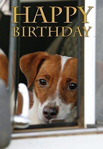 biglietto-di-auguri-jack-russell-terrier-fotografico-per-amanti-dei-cani-di-charles-sainsbury-plaice