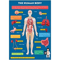 Kids Learn The Human Body Skeleton & Organs Educational Toddlers Childs Poster Art Print Wall Chart A3 (30cm x 42cm)