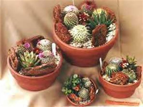 assorted-cacti-a-nice-mixture-of-cacti-seeds-30-seeds