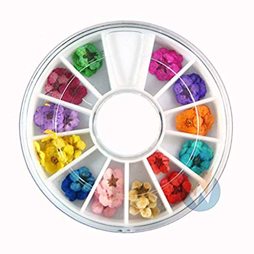 DIKHBJWQ Art Accessories Tapete Echte Wandbilder Trockene Trockenblumen Tapeten 12 Farben Bundle Vliestapete Set in Wheel