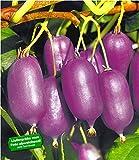 BALDUR-Garten Kiwi 'Ken´s Red®', 1 Pflanze Actinidia arguta Kletterpflanze selbstfruchtend
