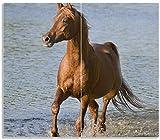 Wallario Herdabdeckplatte/Spritzschutz aus Glas, 2-teilig, 60x52cm, für Ceran- und Induktionsherde, Braunes Pferd am Meer Araber am Wasser