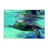 Homyl Aquarium Hintergrund Rückwand Poster - Schildkröte, 76x46cm