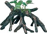 WAVE Beauty Bois Mangrove 1 Objet d'Ornement pour Aquariophilie