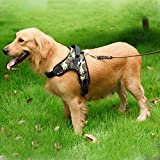 Dog Harnesses Review and Comparison