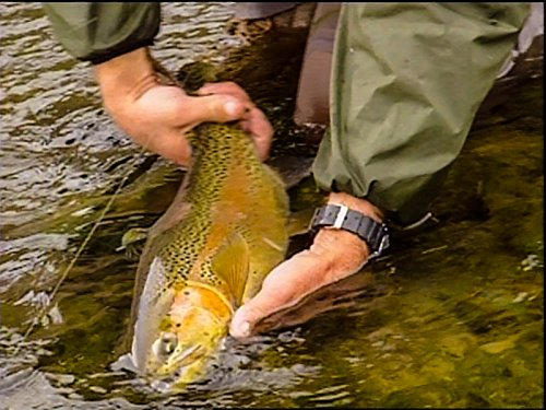 Fishing the best trout river in the