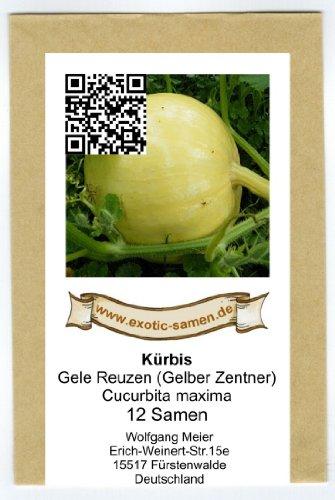 Speisekürbis Gele Reuzen - gelber Zentner - 12 Samen