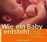 Wie ein Baby entsteht: Die Entwicklung von der Empfängnis bis zur Geburt in sensationellen Bildern