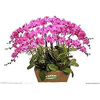 Visa Store NF564xT24: 2018 Nouveautés !!24 tipos de fondos de floración de orquídeas Phalaenopsis pour votre choix - (Couleur NF564xT24)