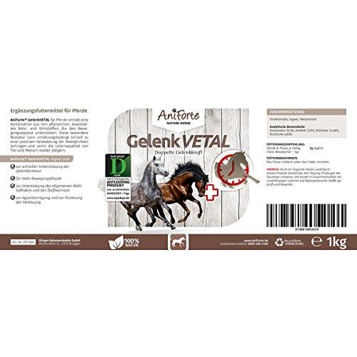 AniForte Gelenk-VETAL Pferd 1kg – Aktiv Gelenk-Kraft für Pferde, Gelenk-Pulver Vital mit Teufelskralle, Ingwer, Weizenkleie, Unterstützung Gelenke, Bewegung, Wohlbefinden, Vitalität, Stoffwechsel