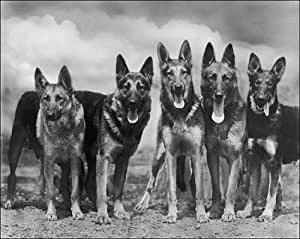 Photographic Print of FALL/GSD/1935/GROUP