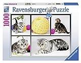 Ravensburger 19545 - Britisch Kurzhaar Katzen - 1000 Teile Puzzle