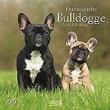 Französische Bulldogge 2019: Broschürenkalender mit Ferienterminen. Hunde-Kalender. 30 x 30 cm