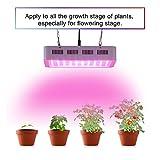 LED-Anlage Fill Light Baumschule Gewächshäuser Blumen und Gemüse pflanzen indoor Blumen Wachstum Lichter, GL-800 W-MINI