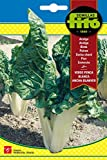 Semillas Fitó 4 - Semillas de Acelga Verde Penca Blanca Ancha Blanver