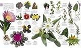 Image de The Natural History Book (Dk)