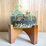 Concretelab&co 1960Style Terrarium Kit mit Holz Ständer Sukkulente Kakteen Himalaya Mix Moos Home Decor Mittelstück Schlafzimmer Wohnzimmer Büro