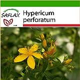 SAFLAX - Heilpflanzen - Johanniskraut - 300 Samen - Mit Substrat - Hypericum perforatum