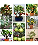 Creative Farmer Fruit Seeds Mega Combo -45 Different Seeds/Packet