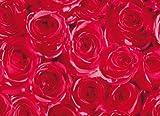 Klebefolie Möbelfolie rote Rosen 45 cm x 200 cm Blumen - Bastelfolie Selbstklebefolie