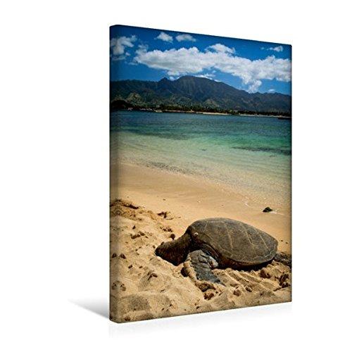 Calvendo Premium Textil-Leinwand 30 cm x 45 cm hoch, Hawaiian Green Sea Turtle - Oahu   Wandbild, Bild auf Keilrahmen, Fertigbild auf Echter Leinwand, Leinwanddruck Orte Orte