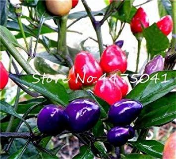 100 PC-Brasilianische Kirsche Chili Hot Pepper Bonsai Bio Köstliche Gemüse Carolina Reaper Hot Chilli Bonsai Außen Pflanze Po: 22 -